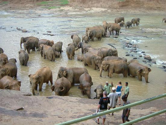 Heritance Ahungalla: Elephant Orphanage