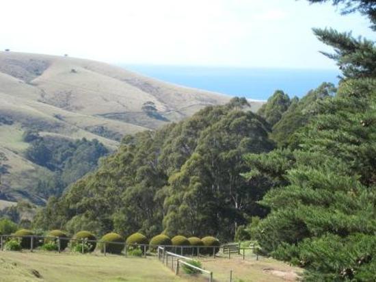 Alyeska Llama Farm Retreat: Just one of the views