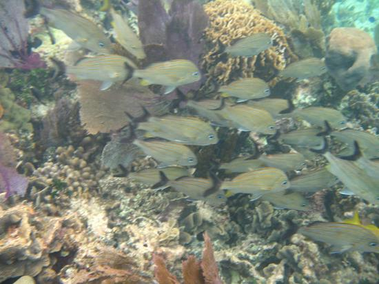 Excellence Riviera Cancun: Reef snorkeling