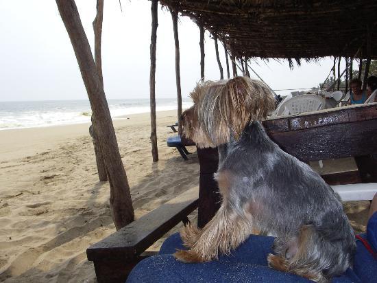 Hacienda Vayma: disfrutando la playa