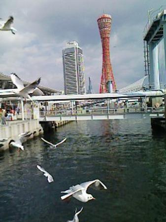 Kobe, Japan: Port Tower with SeaGulls