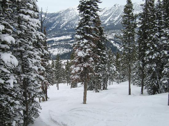 Rainbow Ranch Lodge: Glade skiing