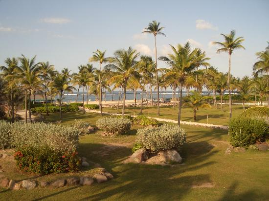 Nisbet Plantation Beach Club: View from our cottage