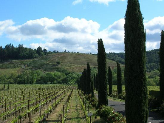 Windsor, Californië: Wine country north of Healdsburg