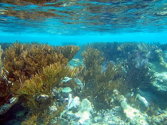 Akumal, المكسيك: Snorkeling-Half Moon Bay