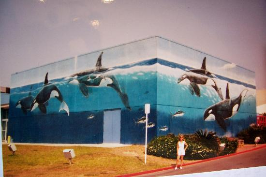 Whaling Wall: THE WALL