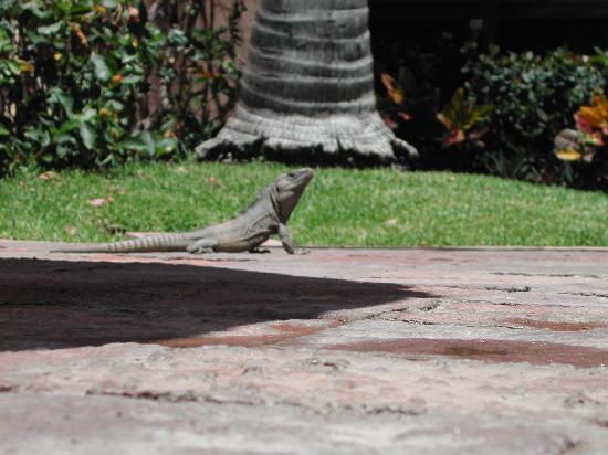 Villas El Rancho Green Resort: 18