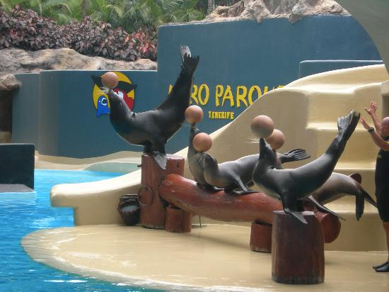 Palm Beach Tenerife: These are the sea lions at LoroParque