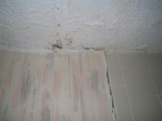 Araamda Inn: Bathroom Ceiling