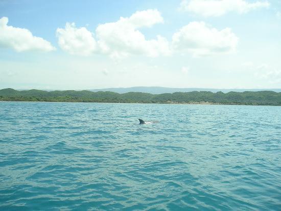 Donaldson's Inn on the Beach: Wild Dolphin sighting