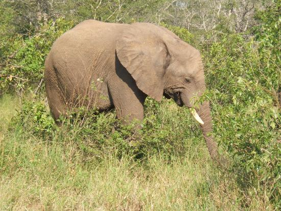 Garonga Safari Camp ภาพถ่าย