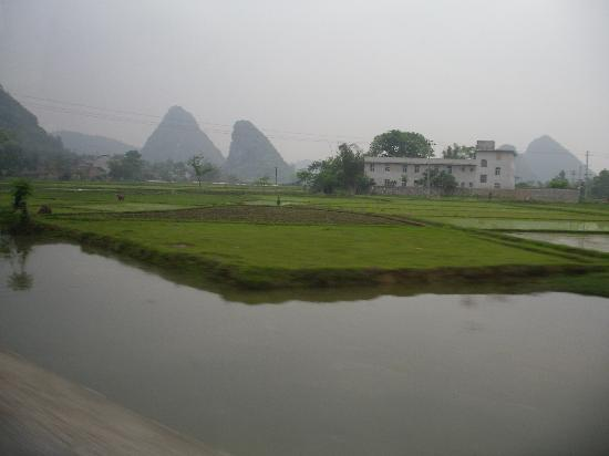 Club Med Guilin: Approach to the hotel is lined with rice paddies