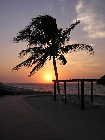 Telchac Puerto, Mexico: Sunset palm