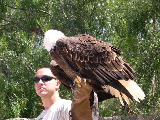 Parque Ecologico Las Aguilas del Teide : Waiting for food