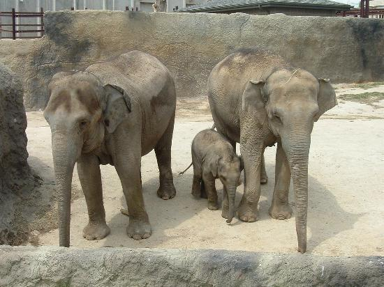 Springfield, MO: Elephants taking a bath