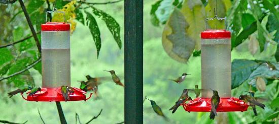 Tandayapa, Ekwador: Saw 16 varieties of humming birds at lodge.
