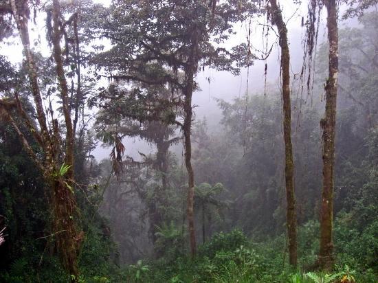 Tandayapa Bird Lodge: Beautiful Cloud Forest