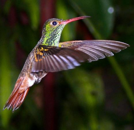 Tandayapa Bird Lodge: Ecuador has more varieties of humming birds than any other country