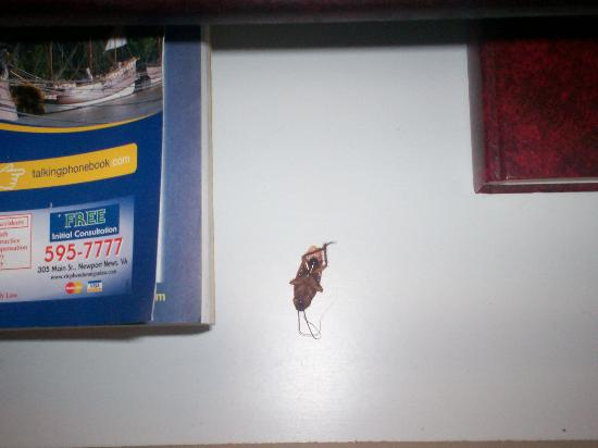 Red Roof Inn Williamsburg: cockroach in drawer