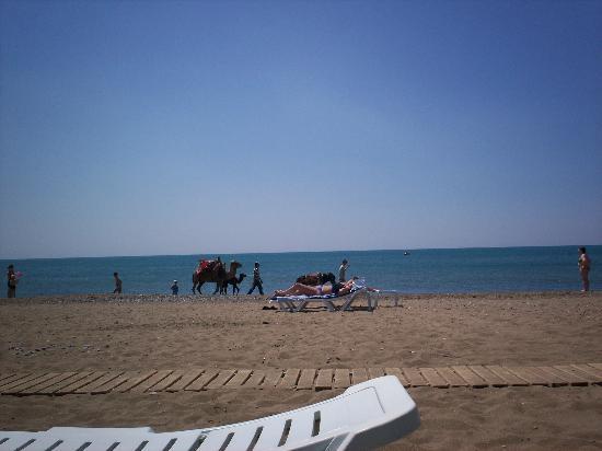 Jacaranda Club & Resort: camels on the beach
