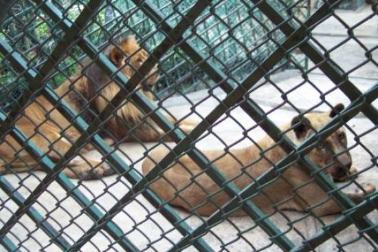 Hotel Park Villa : lions