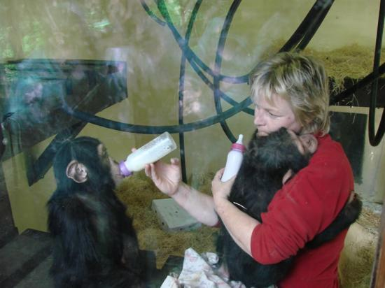 Monkey World: Feeding the baby chimps