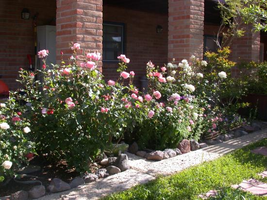 Hilltop Hacienda Bed and Breakfast: Roses at the Hilltop Hacienda