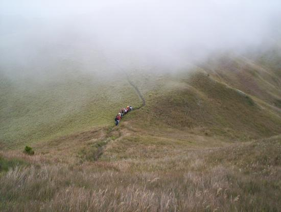 Mt. Pulag National Park: near to sumit