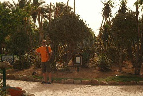 Nubian Village Hotel : Hotelgarten