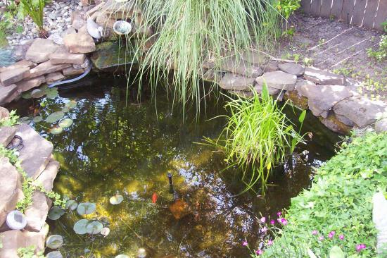 Arbor House Inn: koi pond