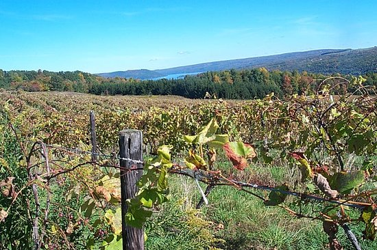 Hammondsport, État de New York : Vinifera Wine Cellars