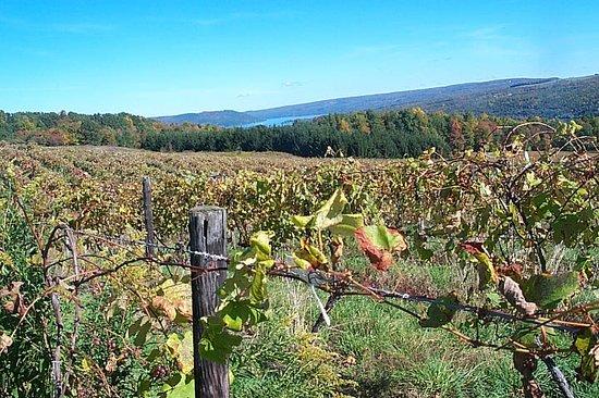 Hammondsport, نيويورك: Vinifera Wine Cellars