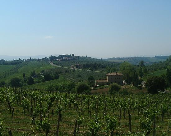 Fattoria Abbazia Monte Oliveto: view of the farm house