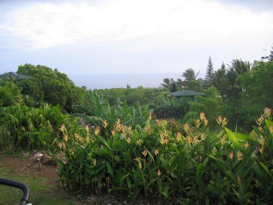 Maui Ocean Breezes: ocean view