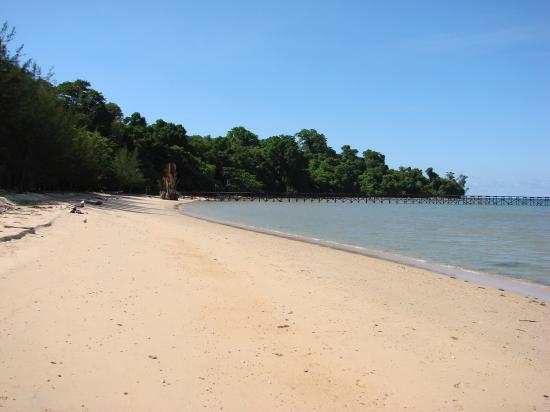 Borneo Survivor Resort: The beach.  Pier in the distance, resort buildings tucked up in the rainforest to the left