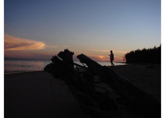 Borneo Survivor Resort: Dusk