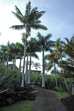 Aloha Guest House: AGH: view from below