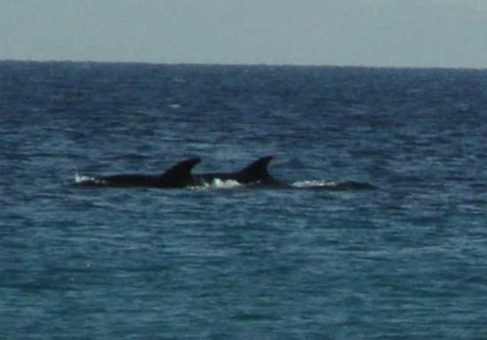 Athos Palace Hotel: dolphins form the Athos palace beach