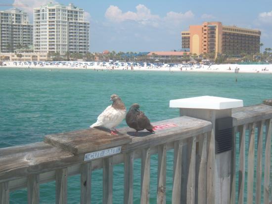 Gulf Gardens Resort: Serene Birds-Clearwater Pier
