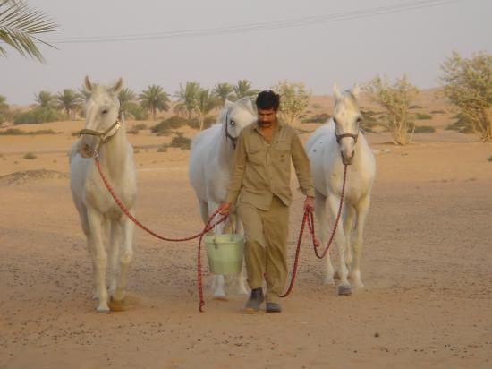 Al Maha, A Luxury Collection Desert Resort & Spa: Arabic horses
