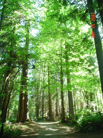 Nice Tall Trees Picture Of Stanley Park Vancouver