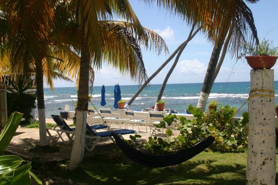 Caribe Playa Beach Hotel Grounds