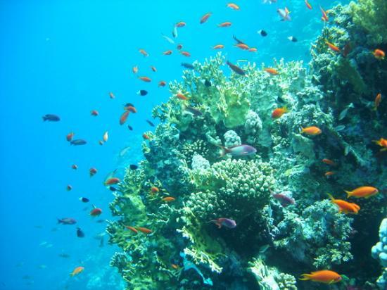 Royal Paradise Beach Resort: Reef of Beeach