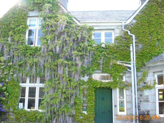 Penmachno Hall: Wisteria in full bloom