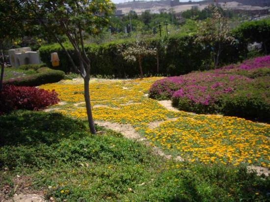 Parc Al-Azhar : carpet of flowers