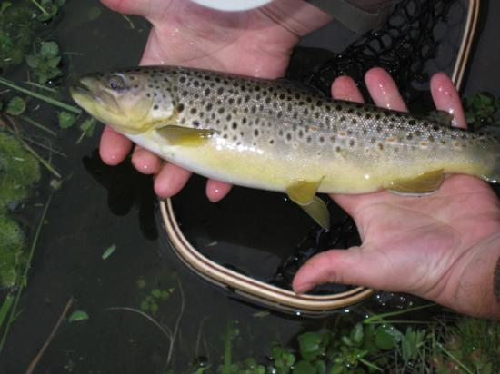 Elk Springs Resort: Beautiful Little Brown