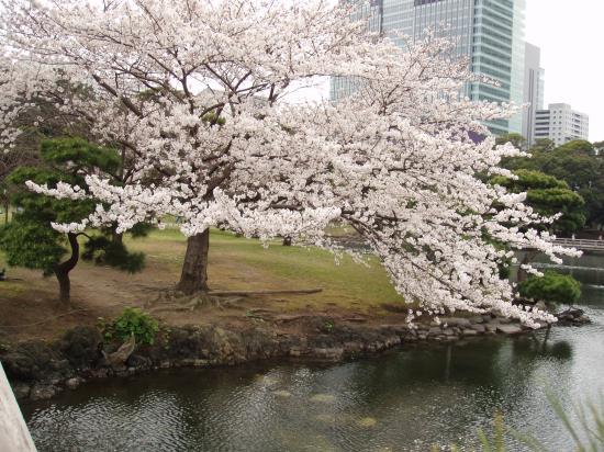 Asakusa : Spring in Japan