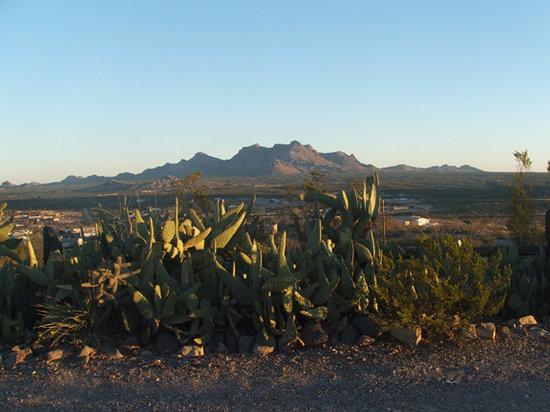 Las Cruces, Nowy Meksyk: Beautiful cacti are plentiful at Hilltop Hacienda.