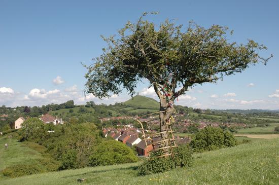 Glastonbury Townhouse: the holy thorn