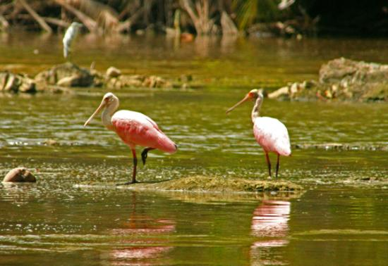 Montezuma, كوستاريكا: Montezuma Costa Rica (rio Lajas)